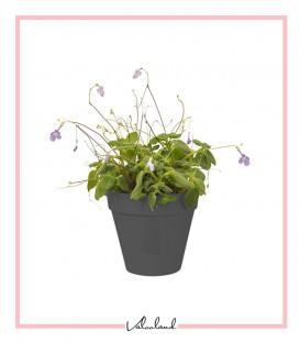 گلدان کوچک دیواری طوسی