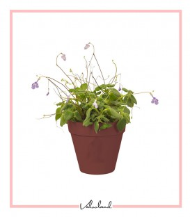 گلدان کوچک دیواری آجری